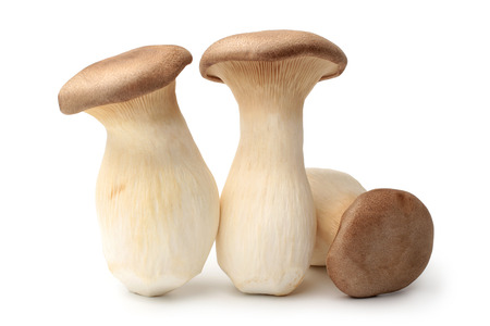Pleurotus eryngii mushrooms on white background