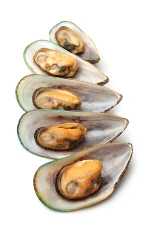 Baked mussels on white background