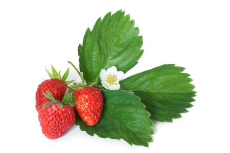 Fresh strawberries with leaves on white background 스톡 콘텐츠