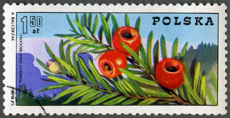 POLAND - CIRCA 1975: A stamp printed in Poland shows Yew branch with berries, and Sudetic Mountains, Centenary of Polish Mountain Guides Organizations, circa 1975 新闻类图片