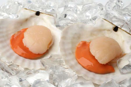 Raw scallops with ice on white background Banque d'images
