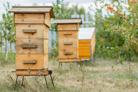 apiary: hive in the apiary Stock Photo