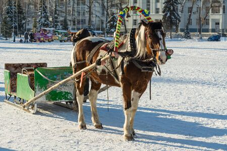 horse sleigh: Horse and sleigh in winter