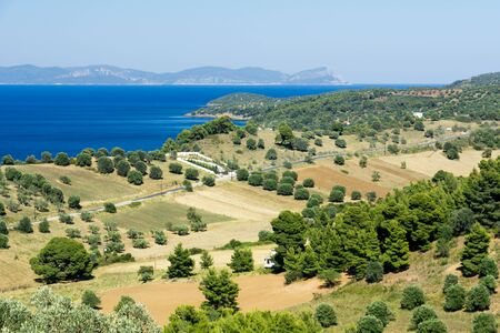 view of the fields of the olives and the sea in Halkidiki Greece Stock Photo