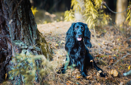 the dog in the woods in autumn
