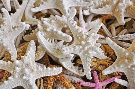 echinoderm: collection sea stars  in  the gift shop Stock Photo
