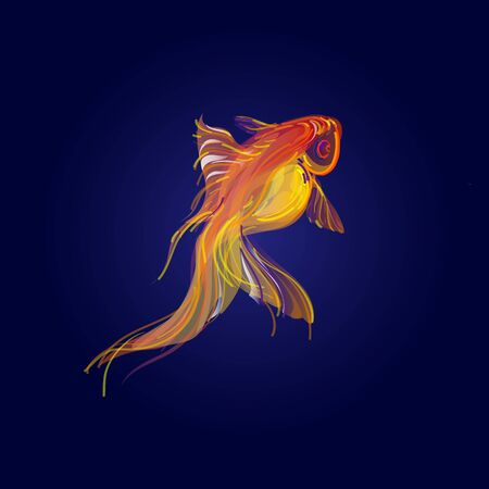 Golden koi fish isolated on blue background.