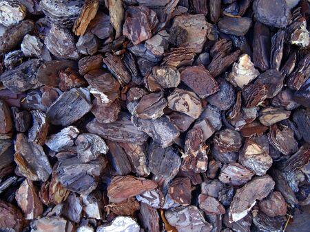 bark texture: pine bark photo, tree bark, bark photo, bark background, bark macro, forest tree, tree texture, bark texture