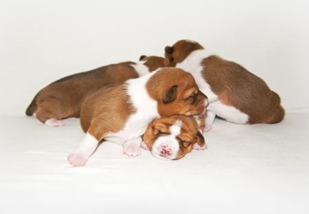 puppies sleeping on the white bed