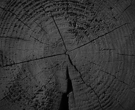 wood floor: wooden texture background blank for design