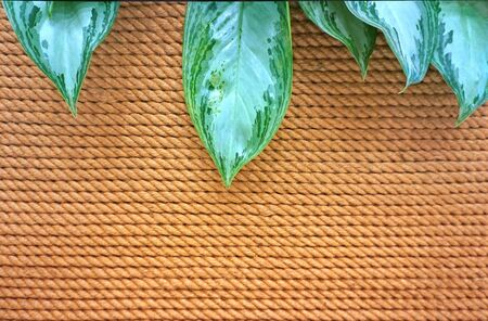 Old yellow rope background with green leaves