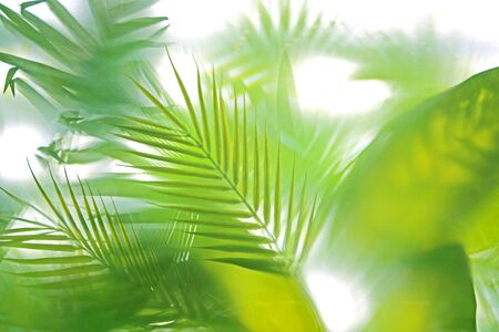 Tropical bamboo trees behind the frosted glass in fog with backlighting. decoration of green plants premises, background. the natural exotic design Banque d'images