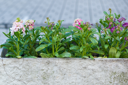 potted flowering plants Stock Photo