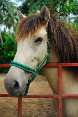 young horse photo