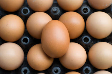 protien: close-up egg in tray Stock Photo