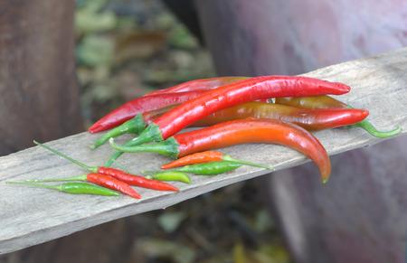 bush pepper: bush red pepper Stock Photo