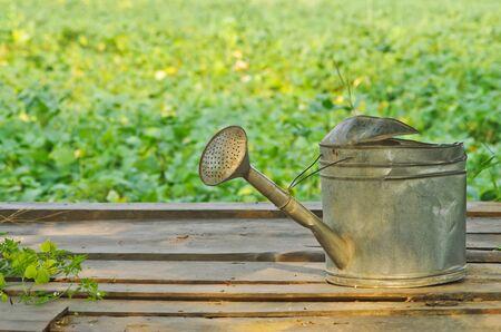 watering pot: old watering pot