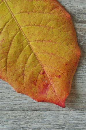 leaf shape: leaf shape background