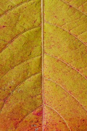 leaf line: leaf line background Stock Photo