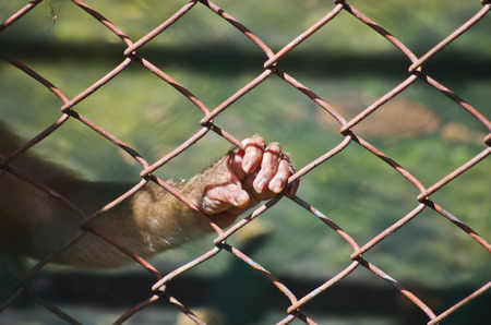 waiting convict: freedom for wild animal
