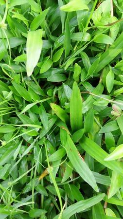 green grass nature Stock Photo