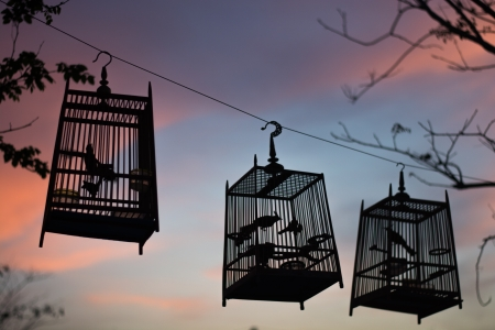Singing bird in a cage at silhouette