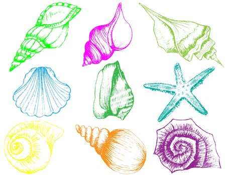 Hand drawn collection of various seashell illustrations 版權商用圖片 - 42570718