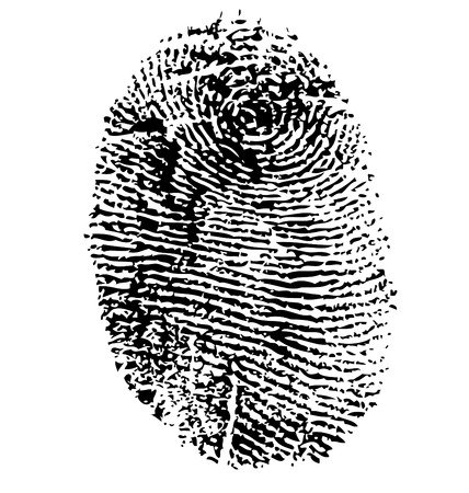 odcisk kciuka: Linii papilarnych wektor odizolowane na białym