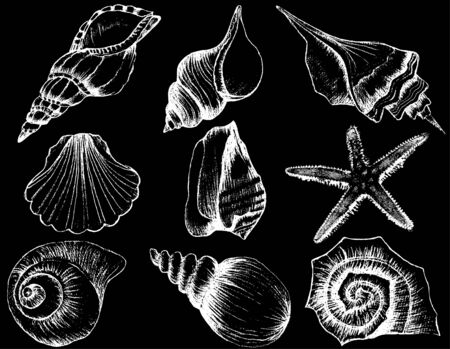 Hand drawn collection of various seashell illustrations isolated on black background 向量圖像
