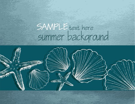 scallop shell: Summer background with shells