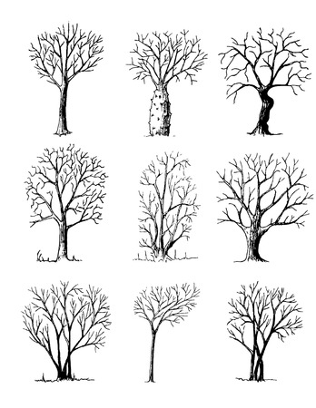 Hand drawn trees isolated on white