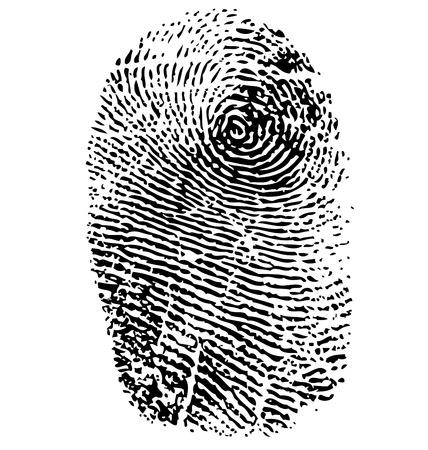 Fingerprint vector  isolated on white