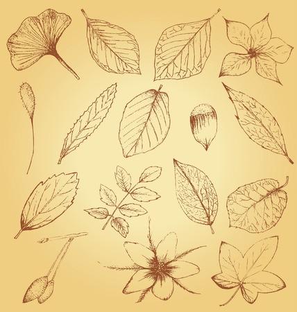 Collection de plantes dessinés à la main Vecteurs