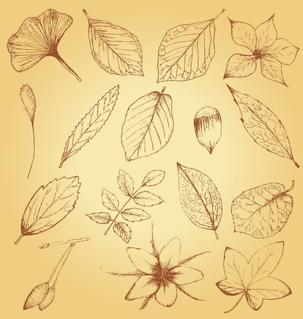 Collection of hand drawn plants 向量圖像