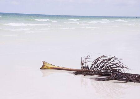 Leaf of palm tree on the sand