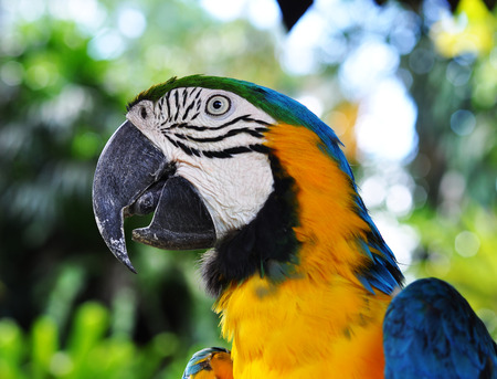 Yellow and blue parrot in the yungle Archivio Fotografico