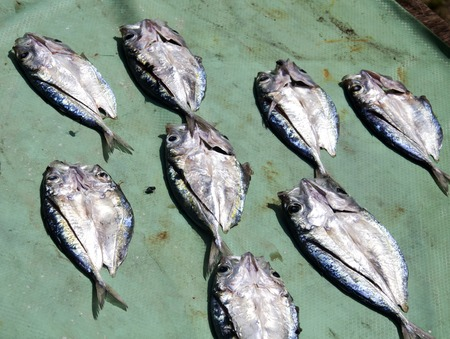 Set of dried fish in the sunny day