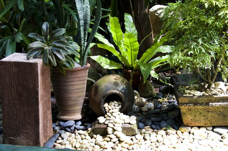 Detail of tropical garden in Boracay, Philippines