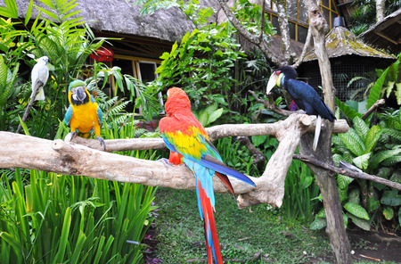 Parrots are sitting on the branch 版權商用圖片