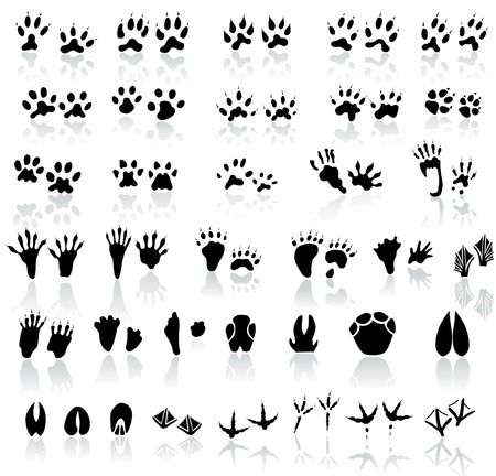 shadow silhouette: Collection of animal and bird trails