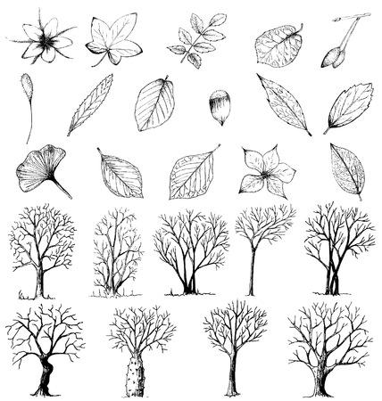 arbol alamo: Conjunto de plantas y árboles dibujados a mano aislados en blanco