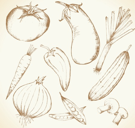 Collection of hand-drawn vegetables, vector illustration