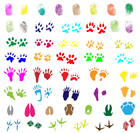 Collection of fingerprints, animal and bird trails