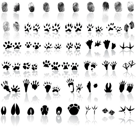 Collection of fingerprints, animal and bird trails 版權商用圖片 - 47181667