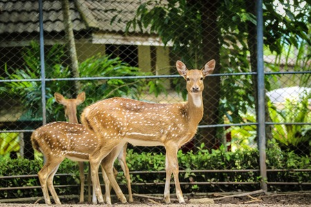 spotted deer at zoo