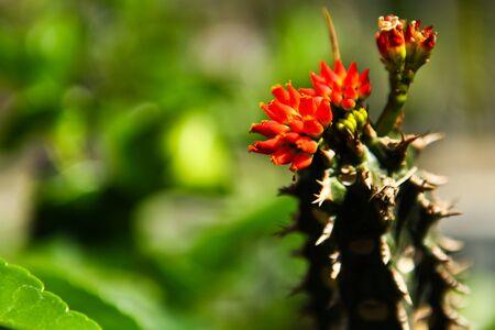 red flower macro photo