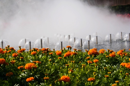 Marigold flower festival in Thailand Stock Photo - 11838477