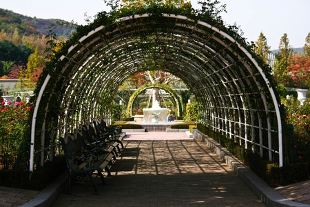 entrance arbor: Old overgrown with leaves pergola