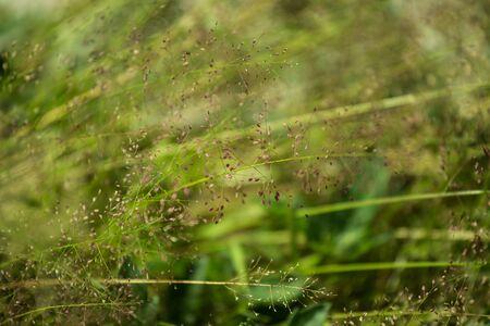 jumble: blurry grass flower