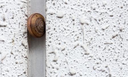 gunk: Shell climb on white concrete wall Stock Photo